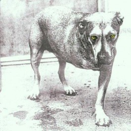 Alice In Chains Alice In Chains CD