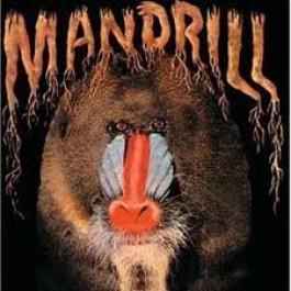 Mandrill Mandrill LP