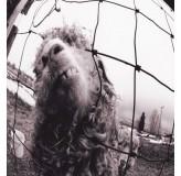 Pearl Jam Vs CD